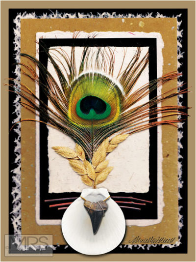 Peacock Shell